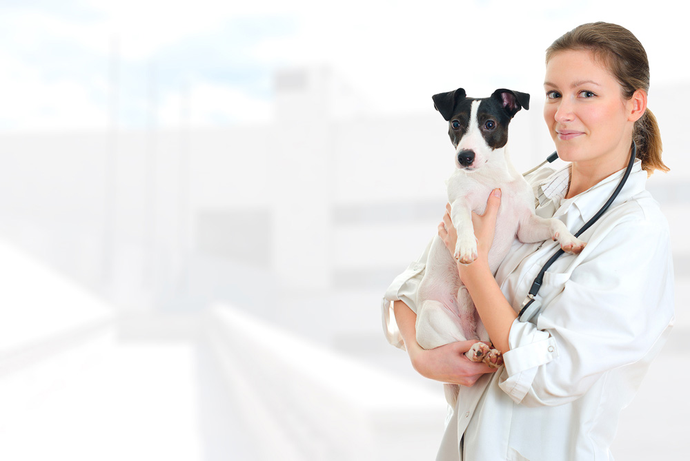 about your veterinarian in uniontown