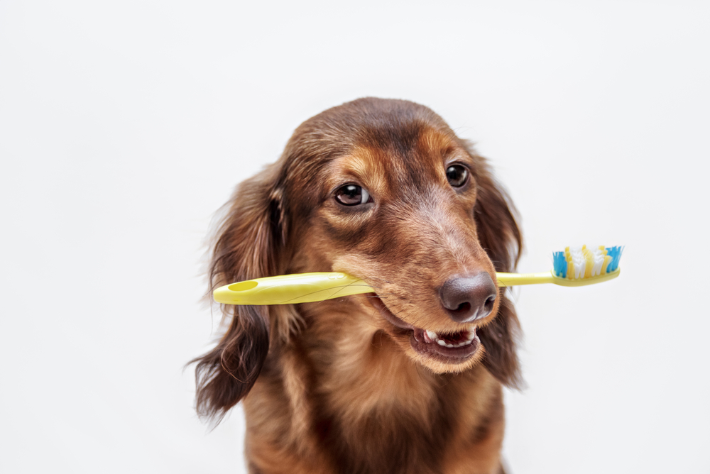 If you're worried about your pet's dental hygiene contact our Uniontown veterinarian. We can help provide pet dental care such as cleanings and check-ups.
